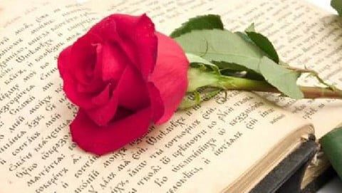 Sant Jordi: books and roses, tradition and love